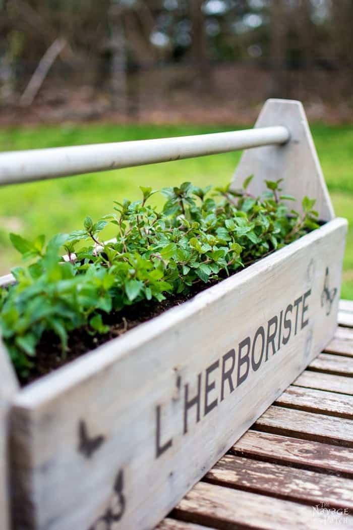 herbs garden in wooden planter box
